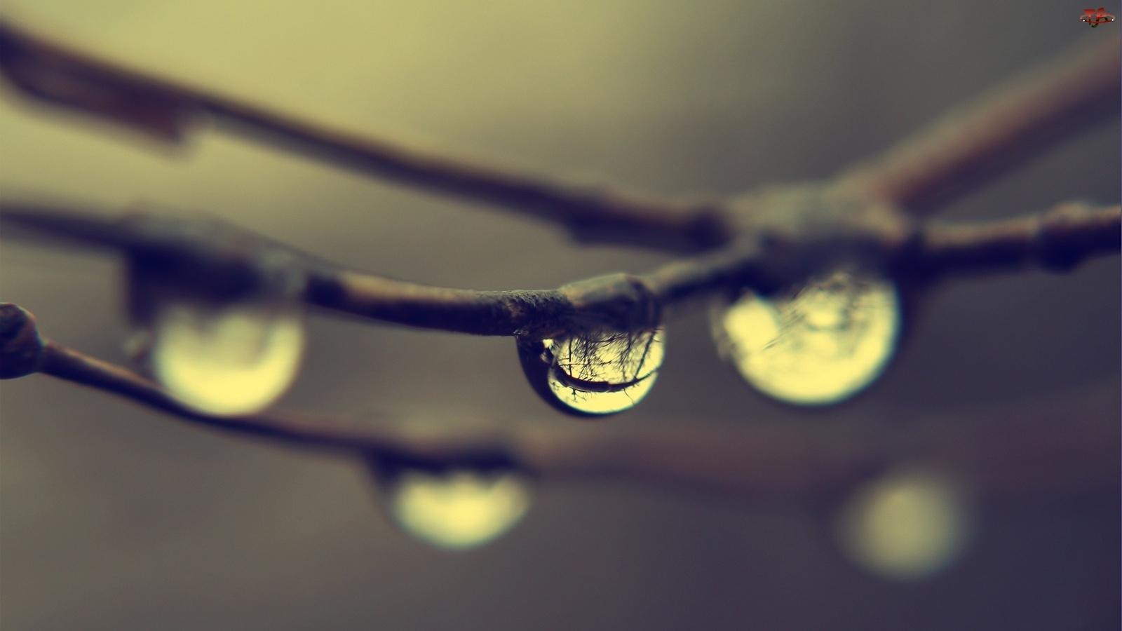 Wody, Gałęzie, Krople