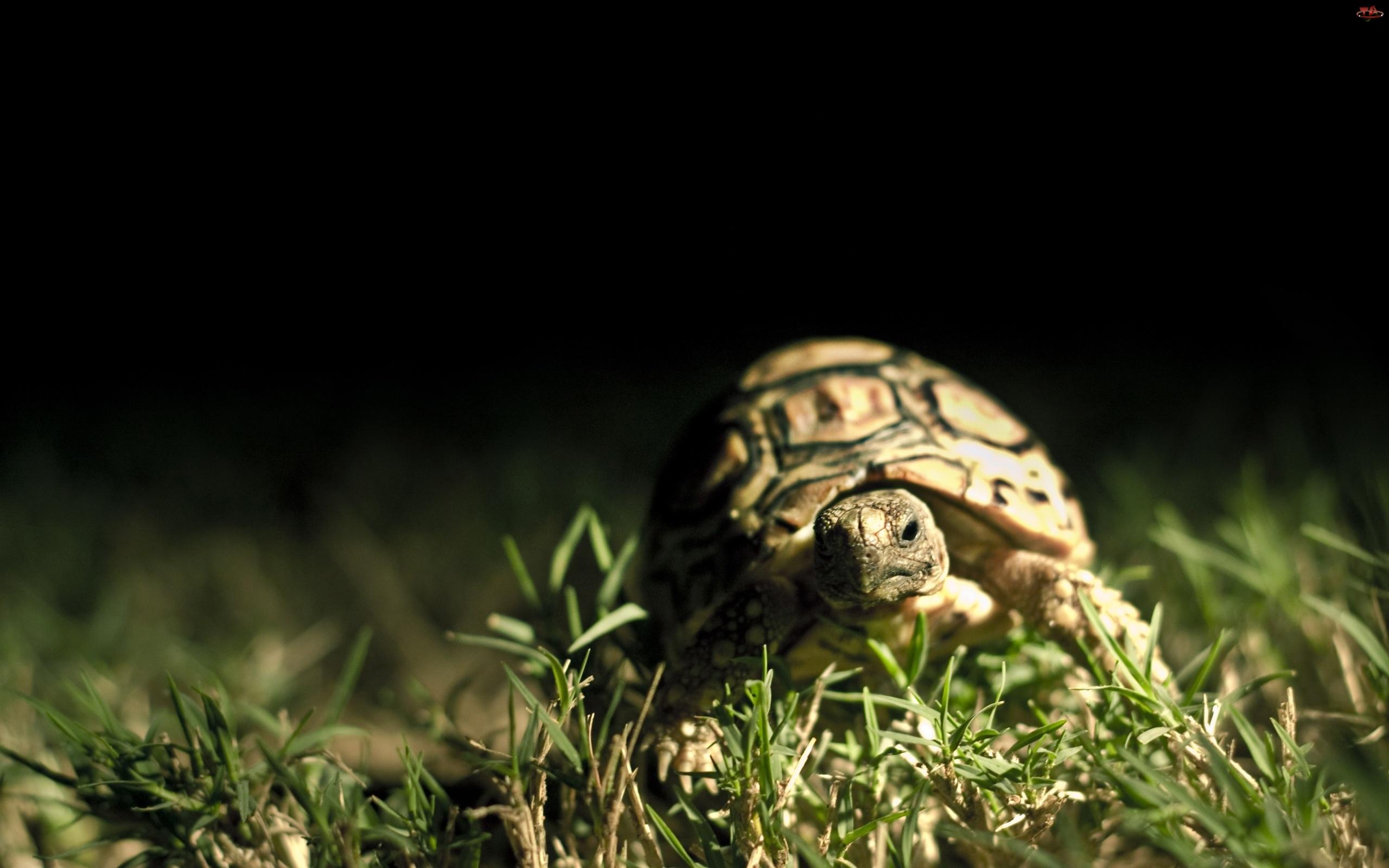 Żółwik, Spacer