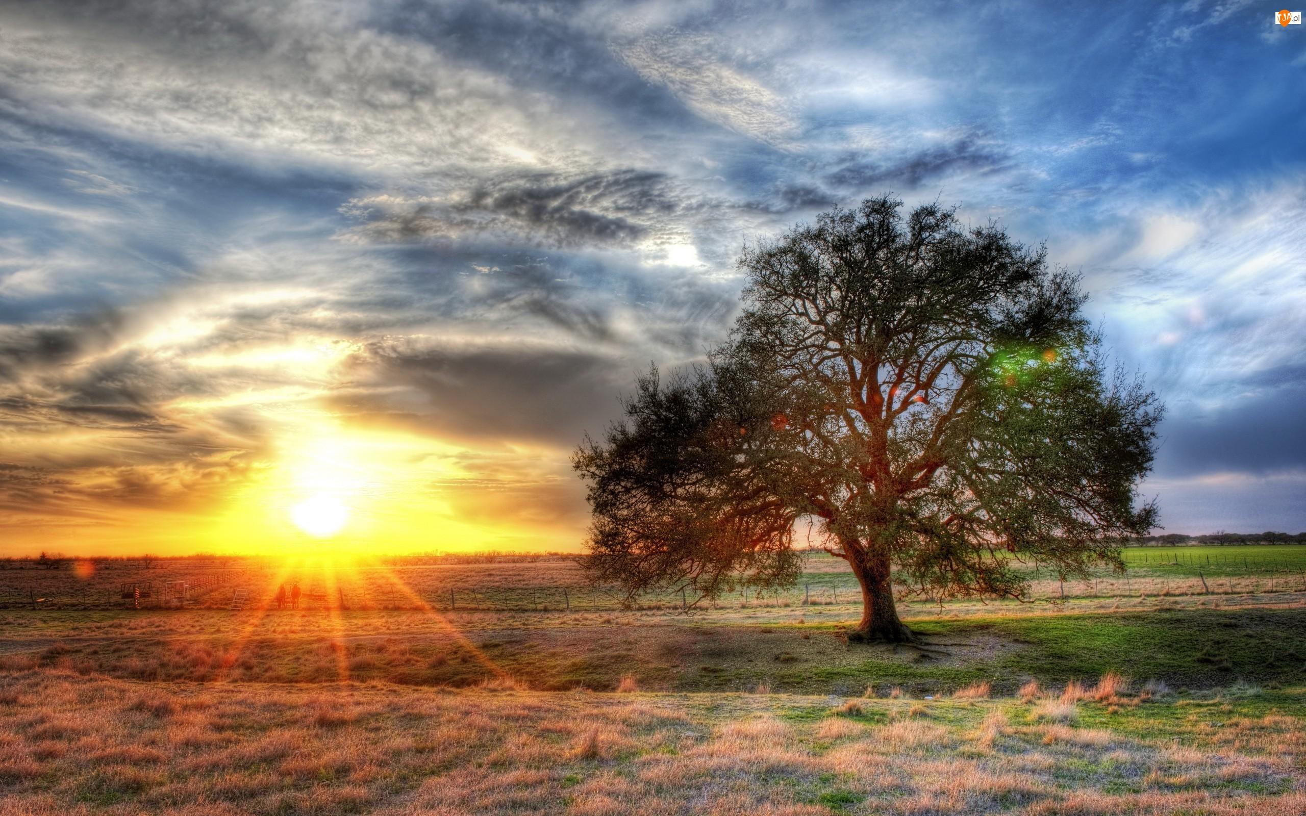 USA, Zachód, Farma, Słońca, Teksas