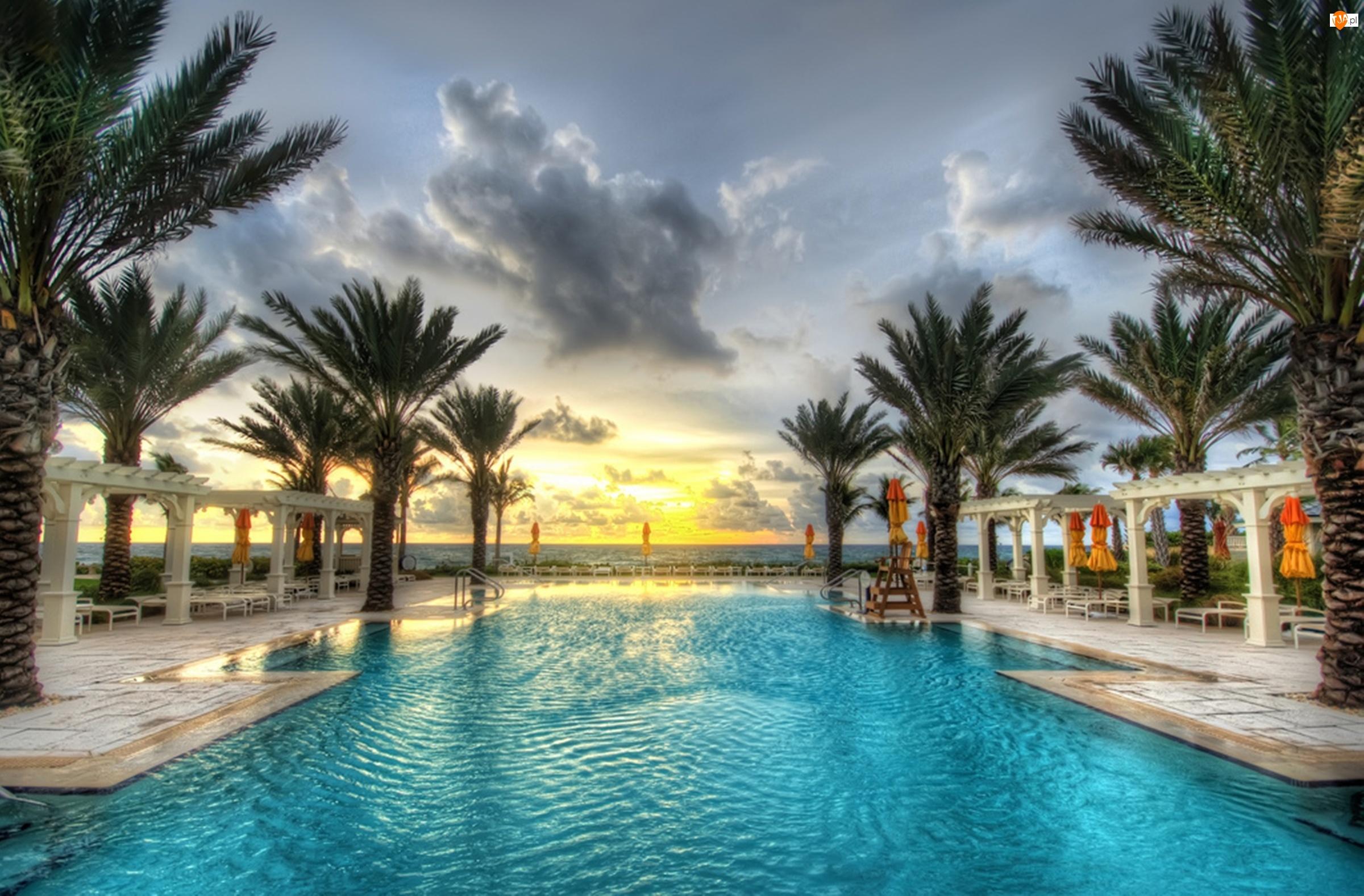 USA, Basen, Palm Beach, Palmy, Floryda