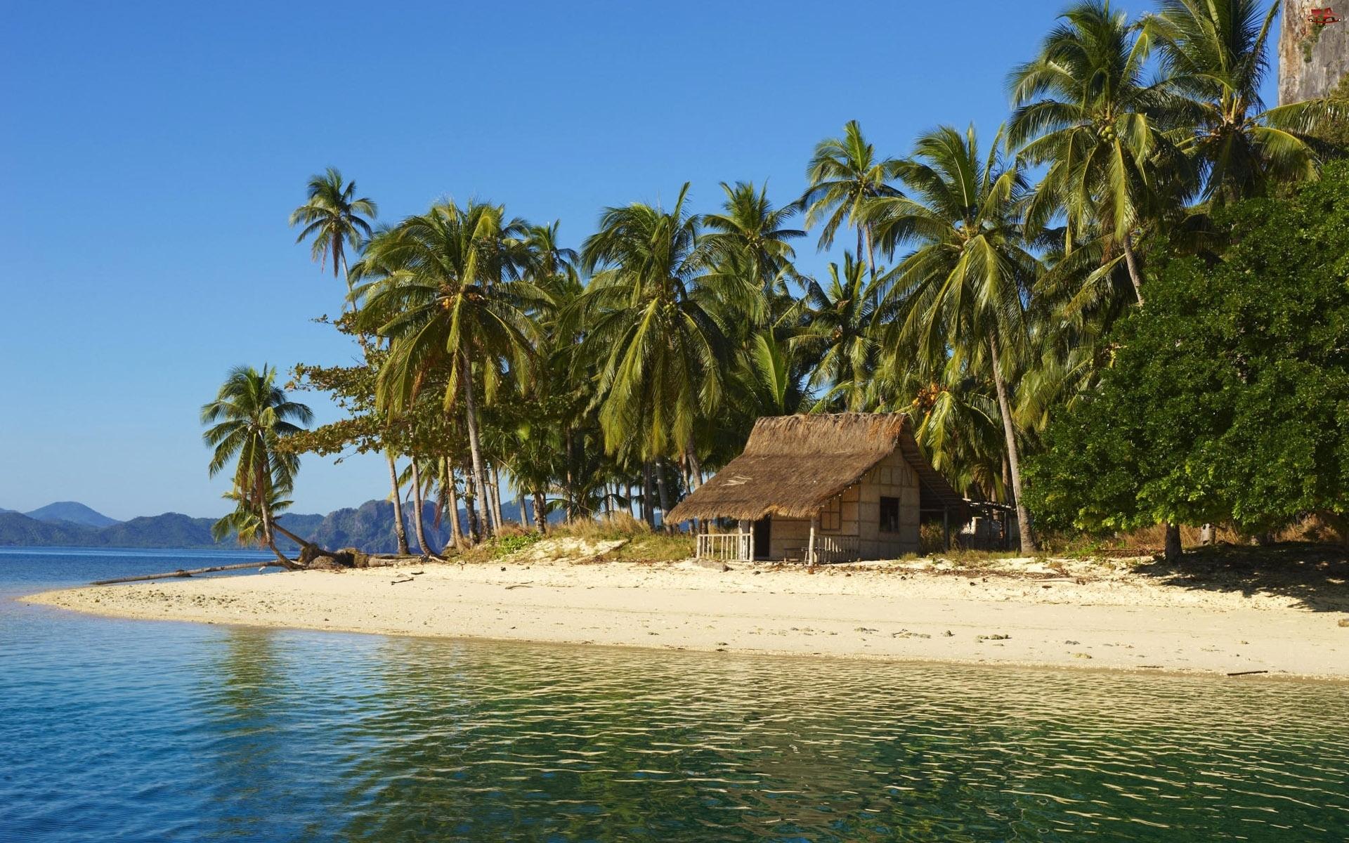 Palmy, Wyspa, Domek