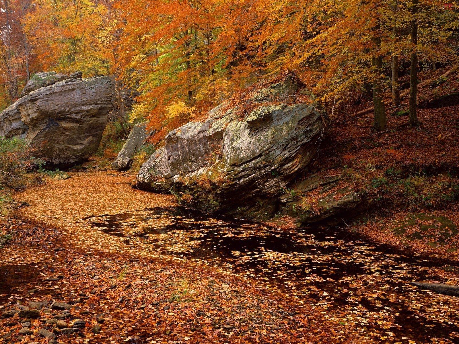 Jesieni, Las, Strumyk, Drzewa, Kolory