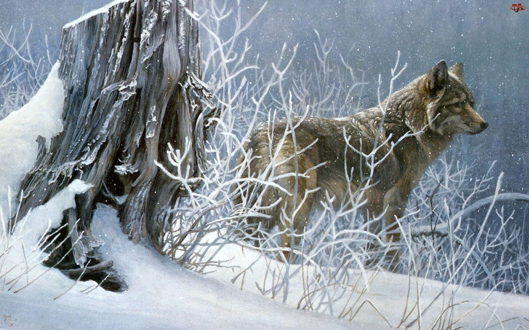 Wilk, Zima