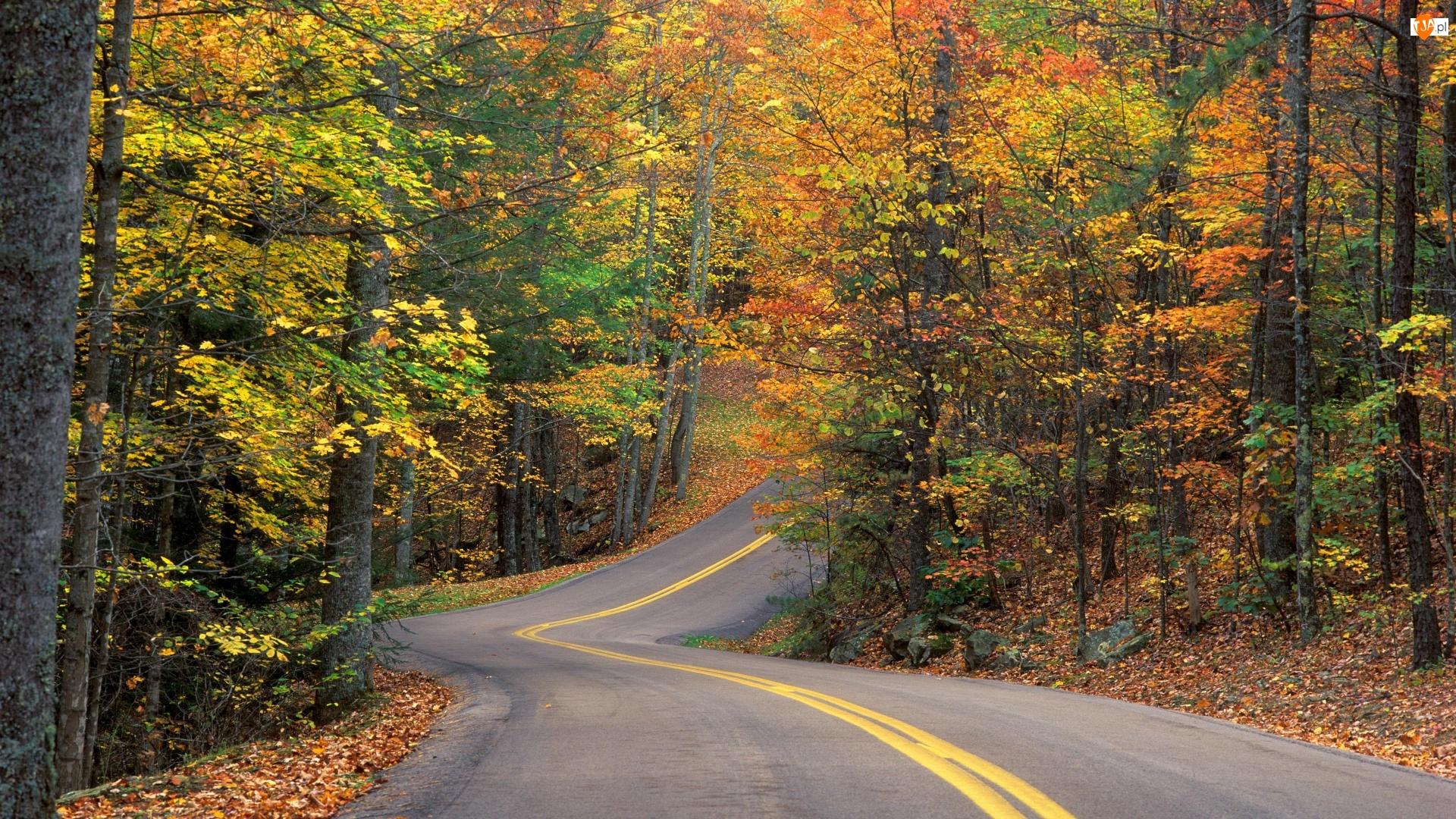 Droga, Jesienny, Las