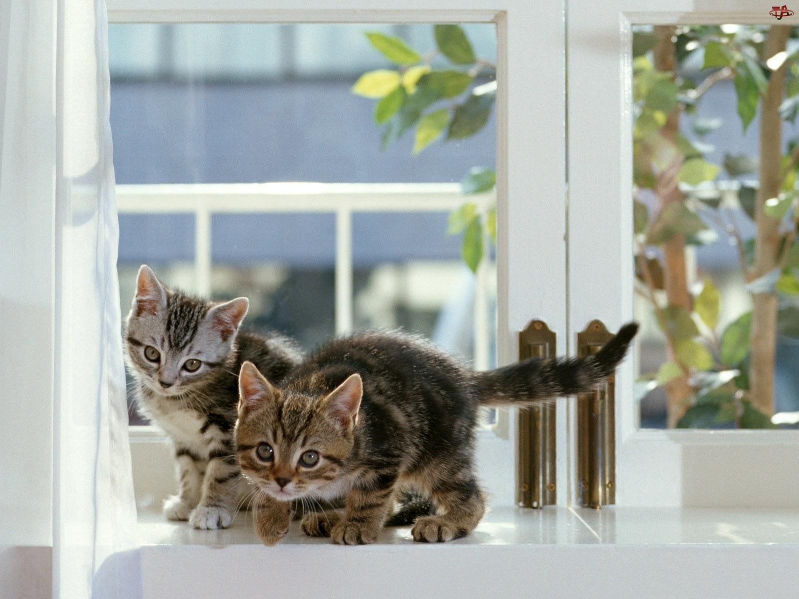 Koty, Parapet