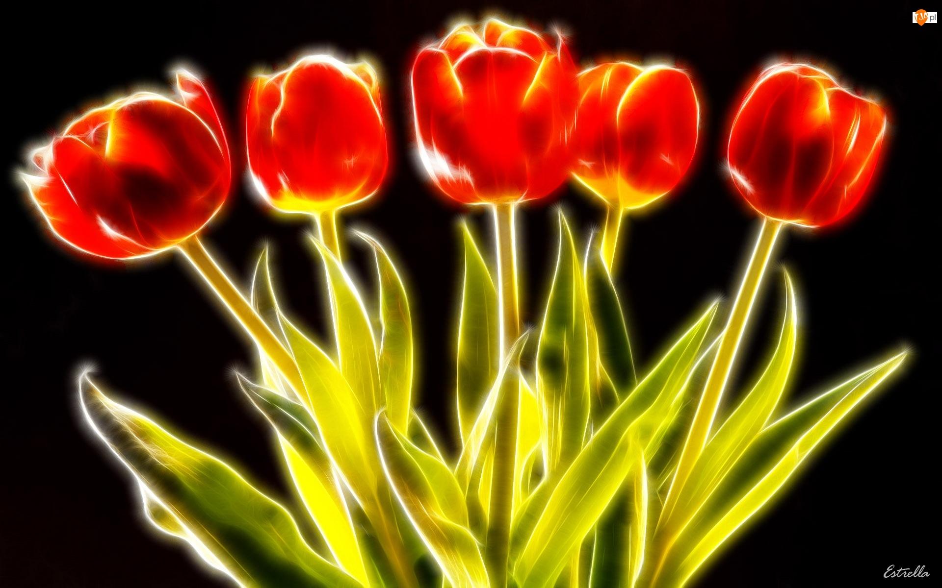 3D, Sześć, Tulipanów