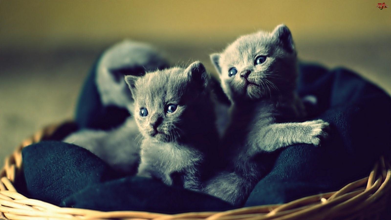 Słodkie, Kociaki