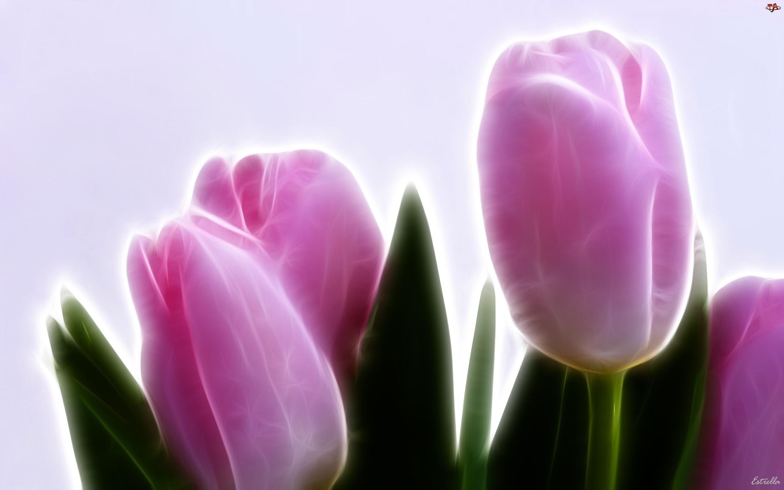 3D, Różowe, Tulipany