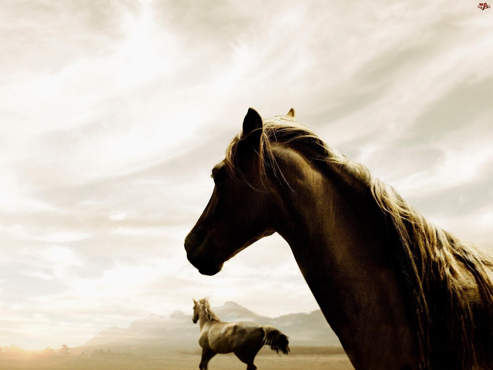 Gniade, Niebo, Konie, Białe