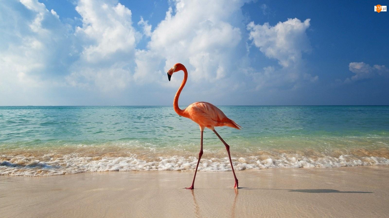 Morze, Flaming, Plaża