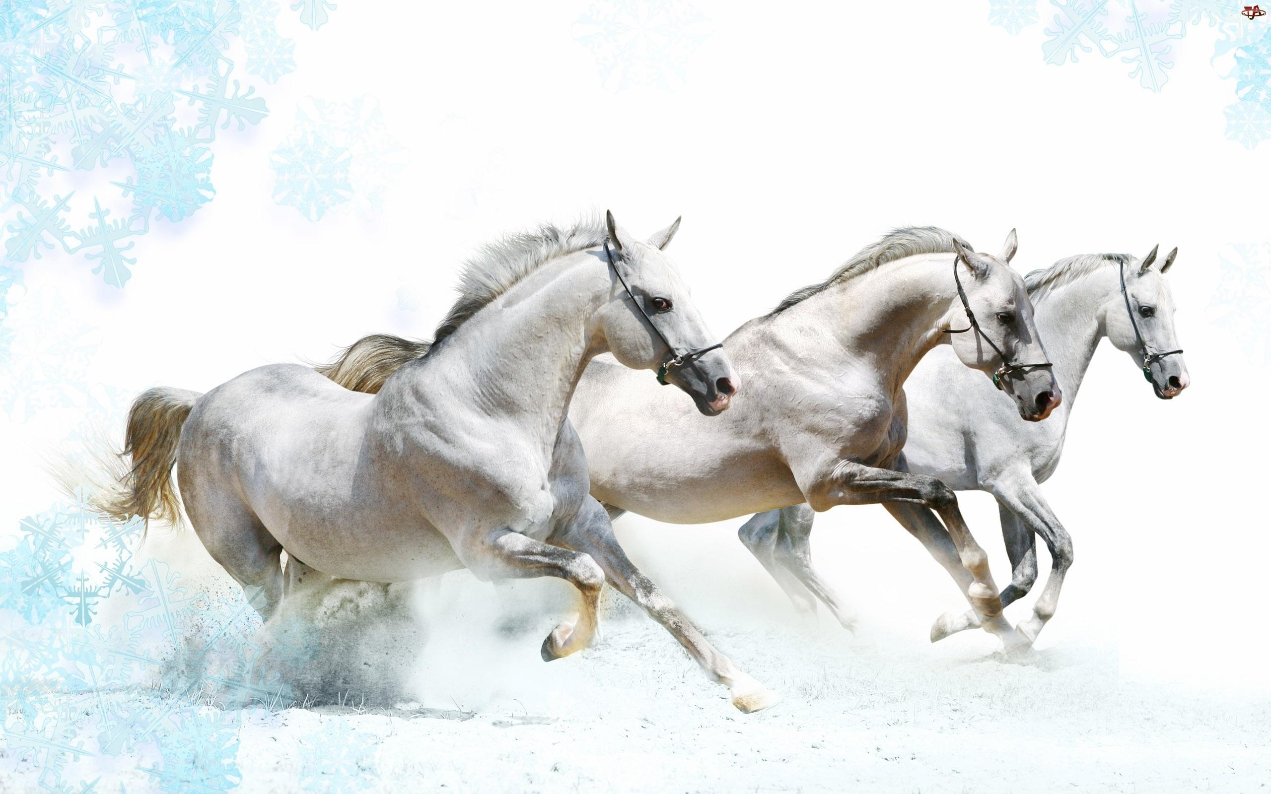 Trzy, Galop, Białe, Konie