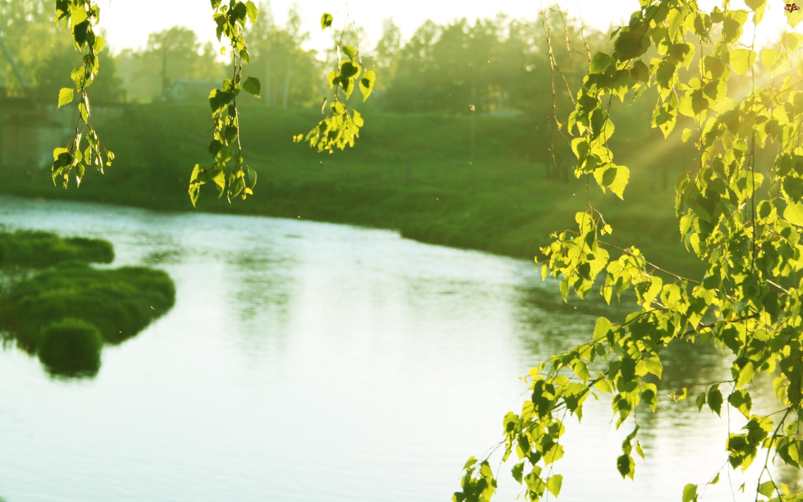 Rzeka, Liście, Zieleń