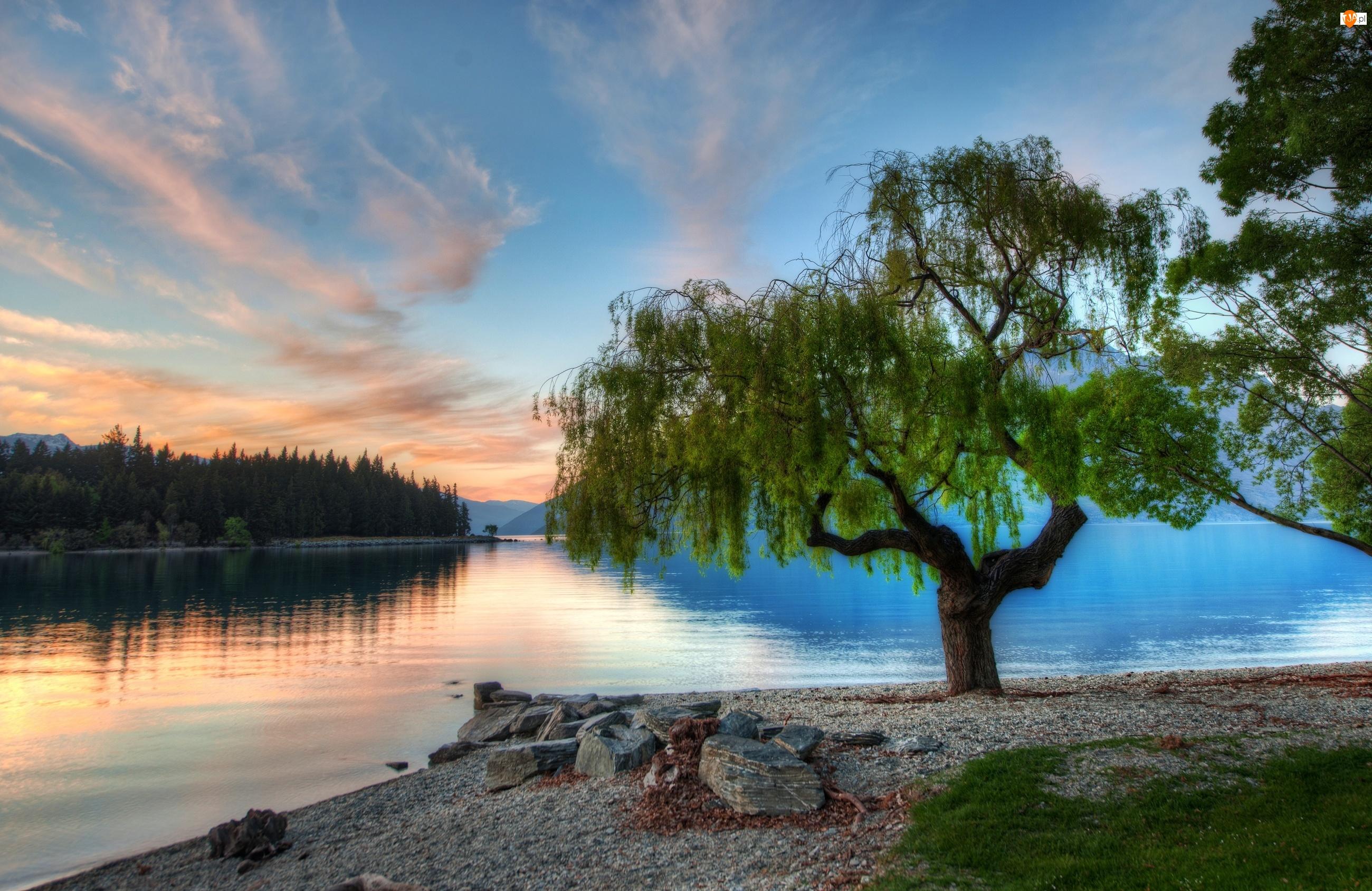 Drzewo, Nowa Zelandia , Jezioro, Serene
