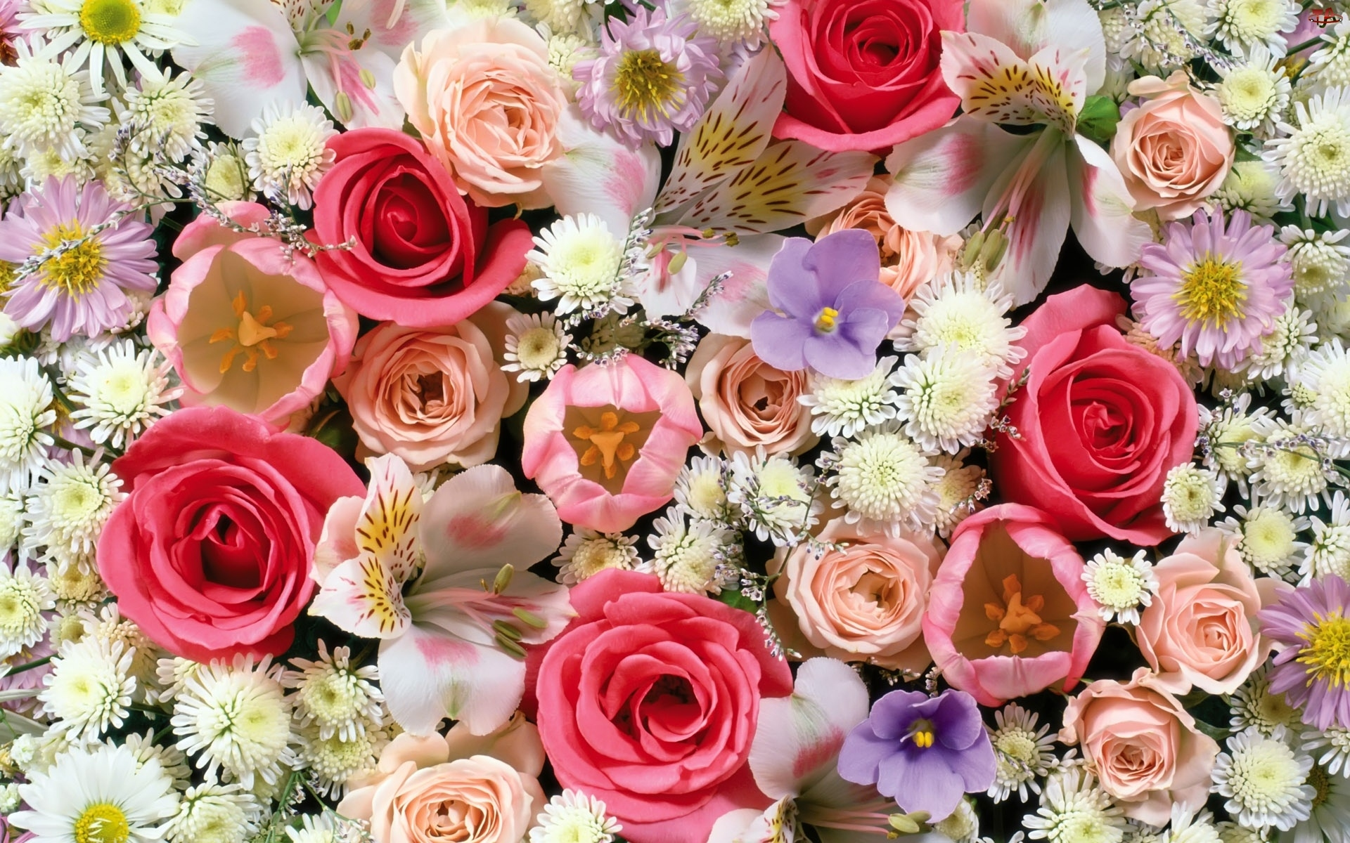 Kwiatki, Róże, Inne