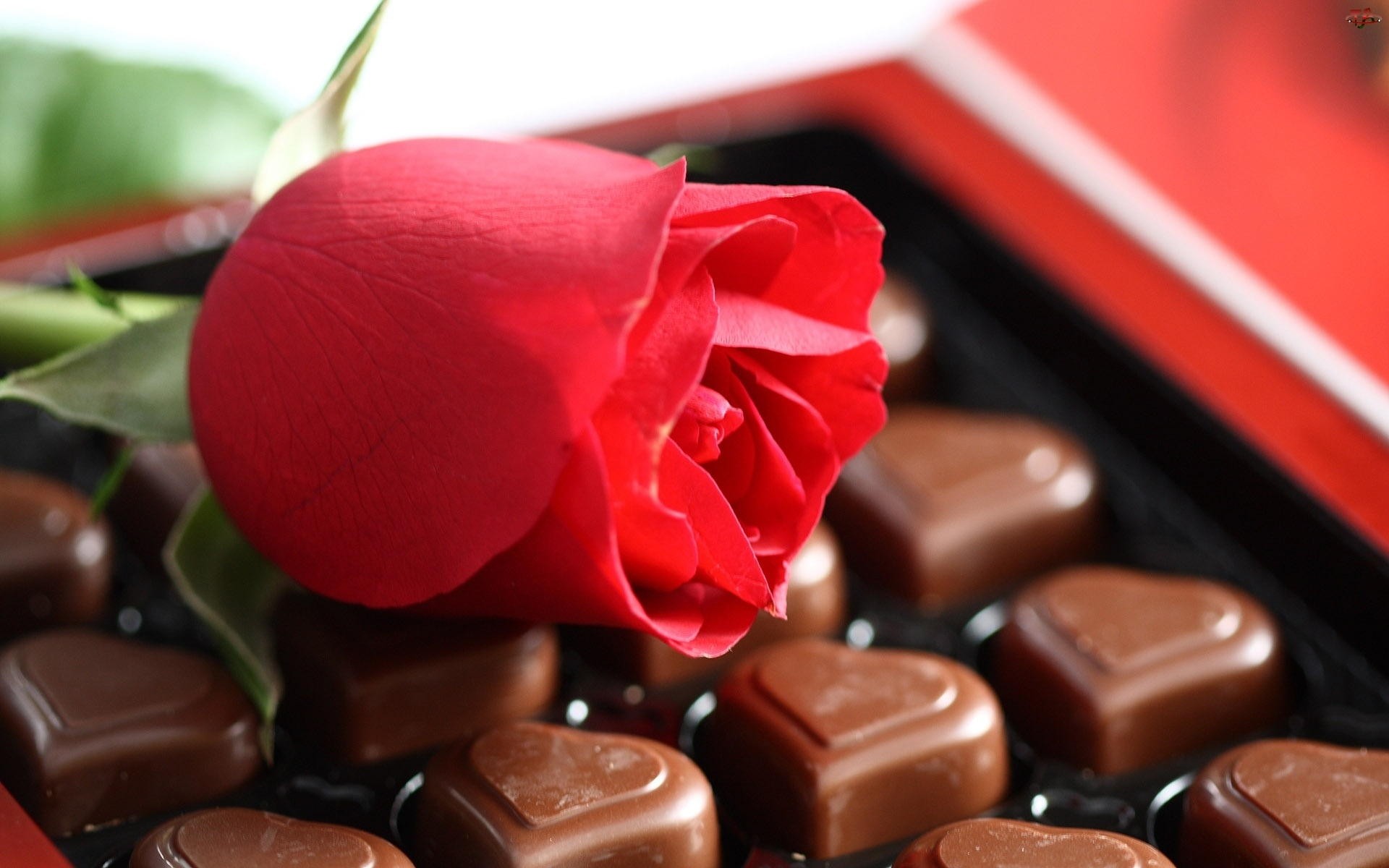 Serduszkowe, Róża, Pralinki, Walentynki