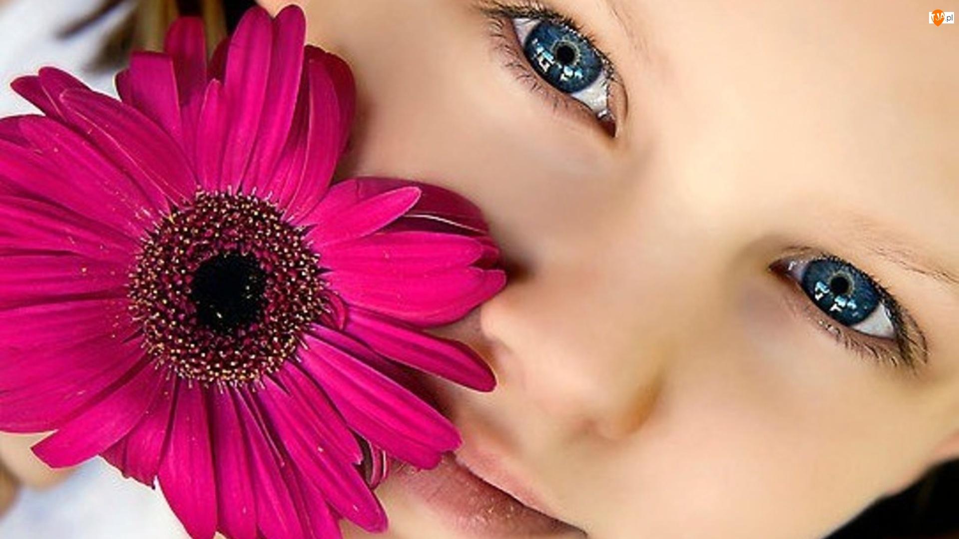 Gerbera, Dziewczynka, Kwiat