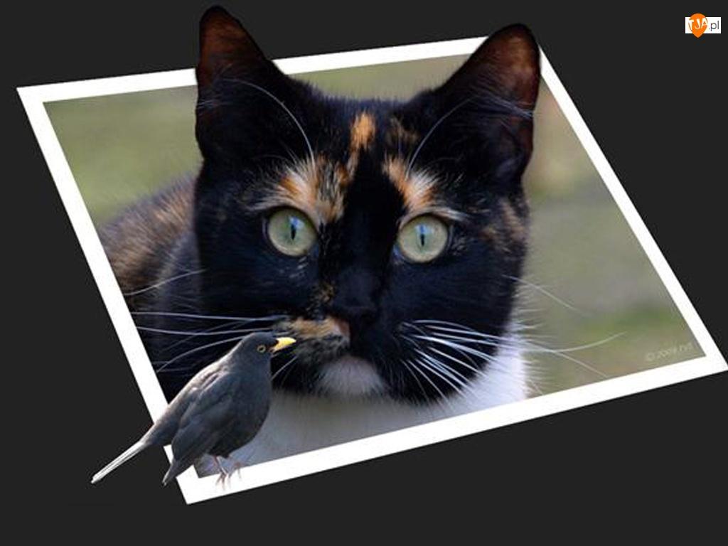 4D, Kot, Ptak