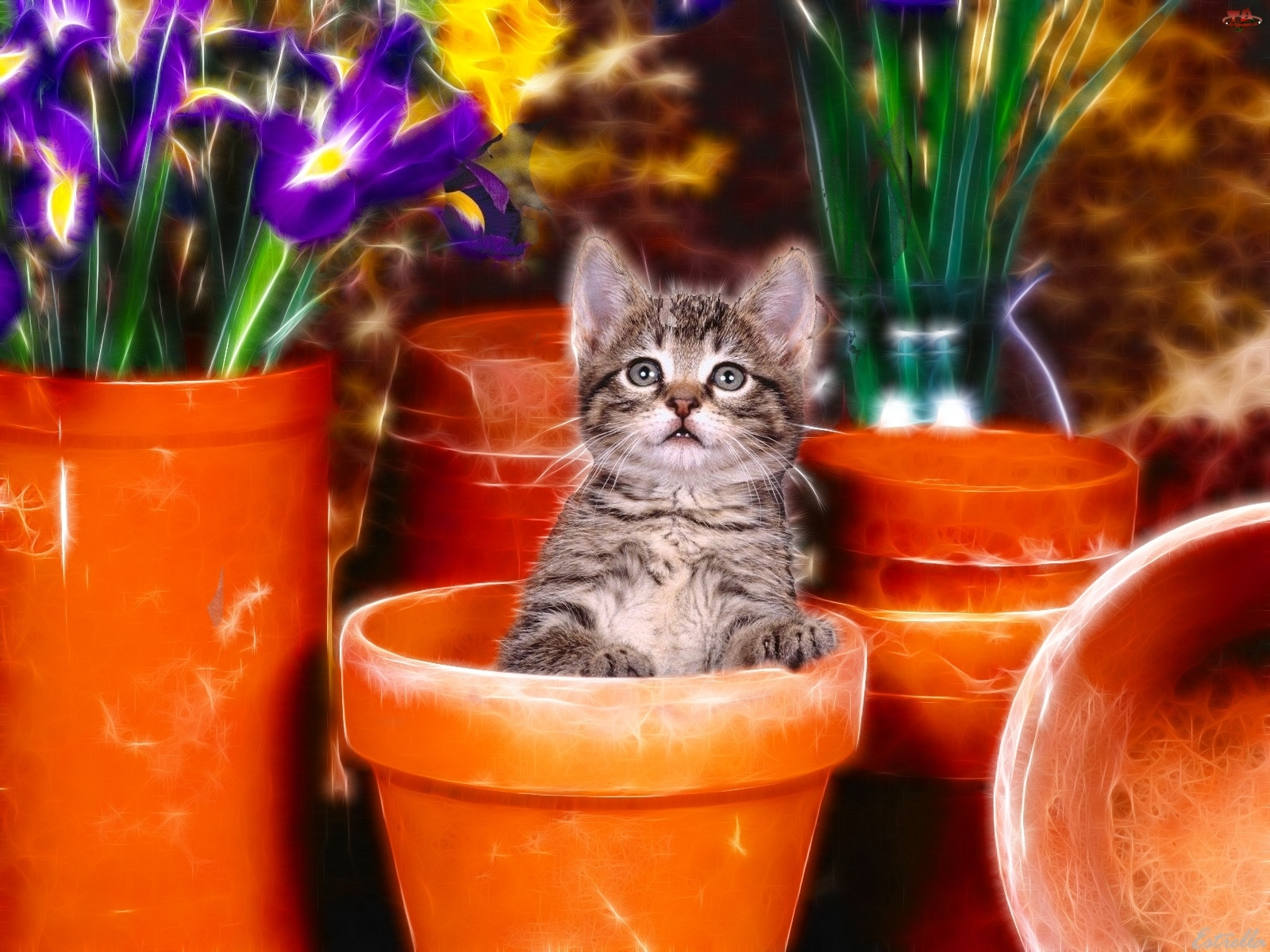 Kotek, Kwiaty, Słodki, Grafika, Mały, Doniczki