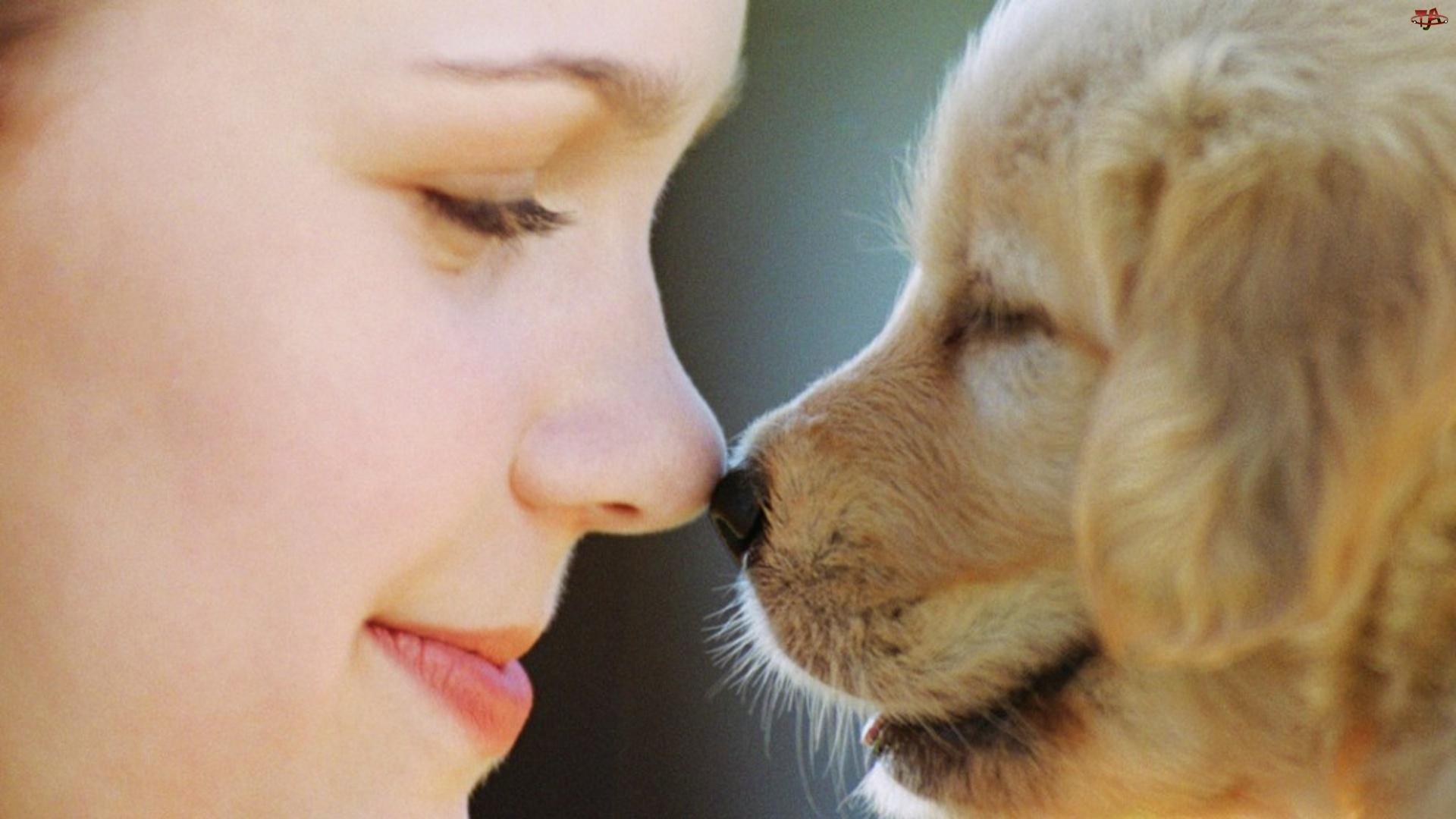 Nos, Pies, Nos, Kobieta, W
