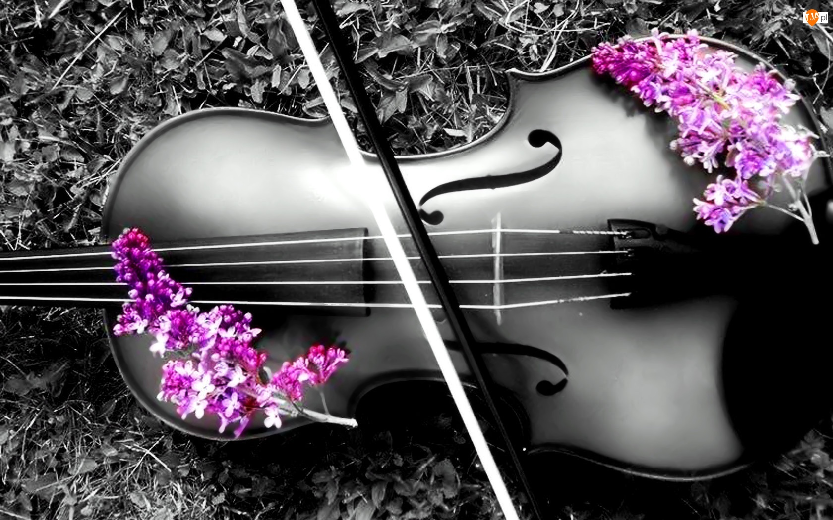 Kwiaty, Skrzypce, Kolorowe