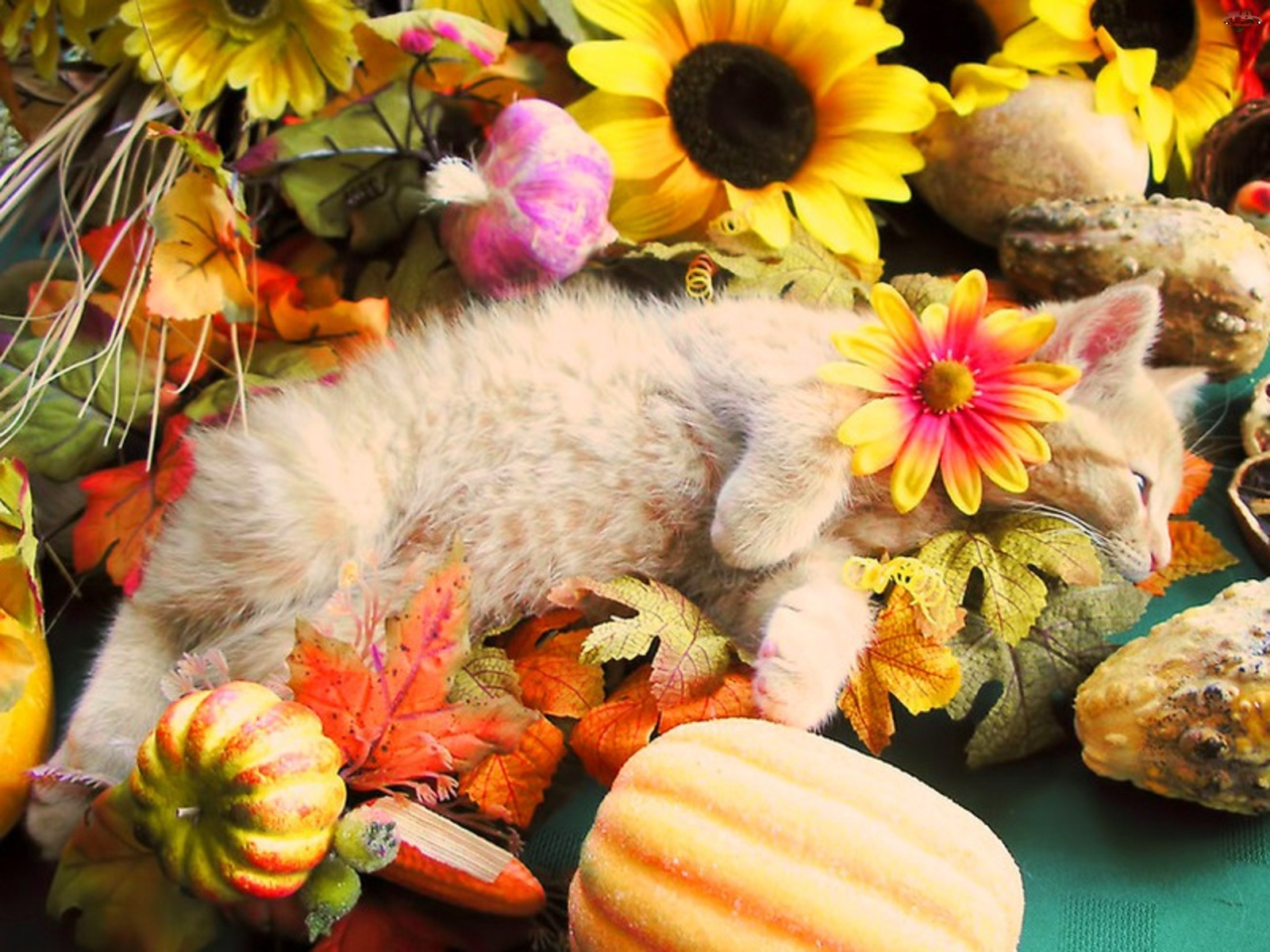 Kot, Jesień