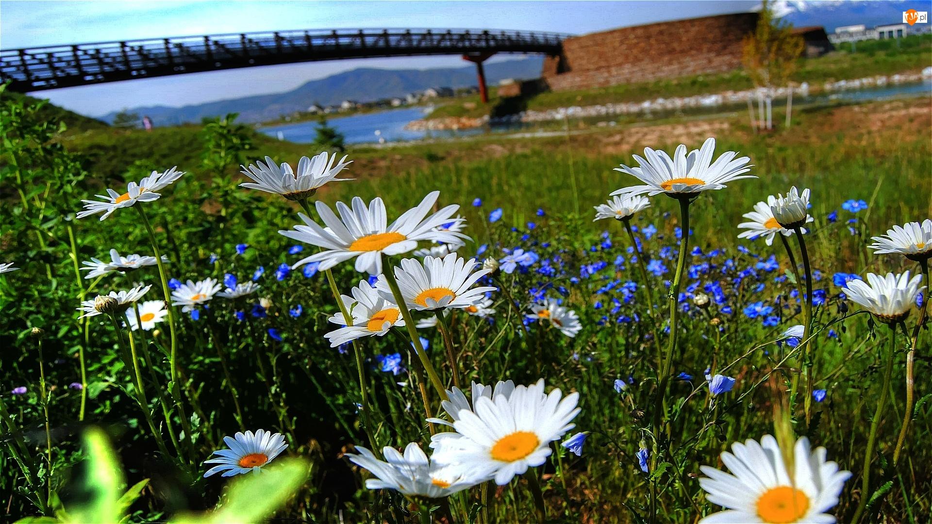 Wiosna, Kwiaty, Most, Rzeka