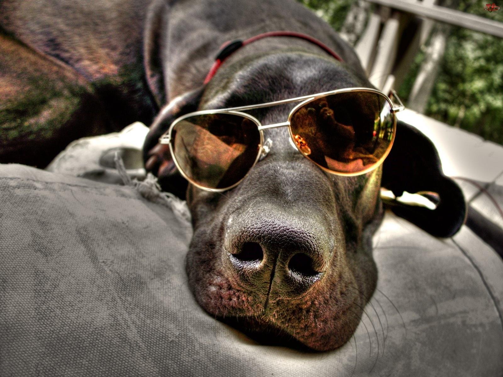 Okulary, Pies, Ciemne