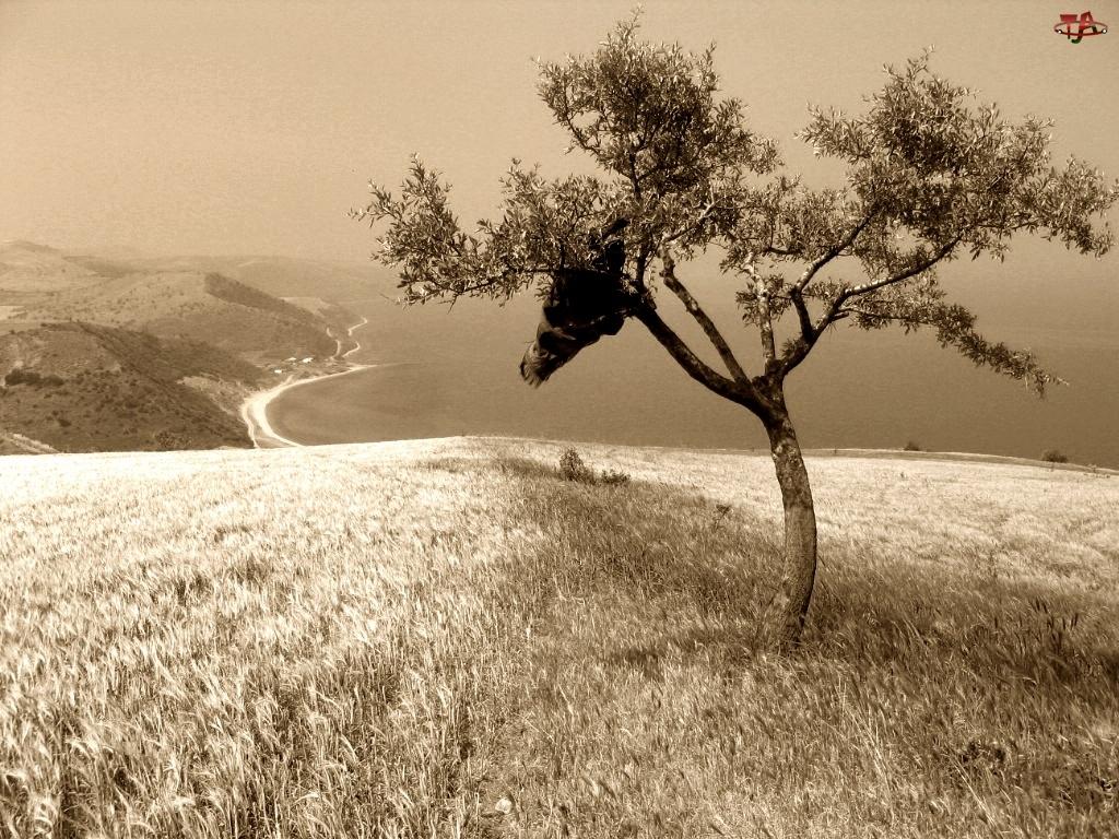 Wzgórze, Sepia, Drzewo