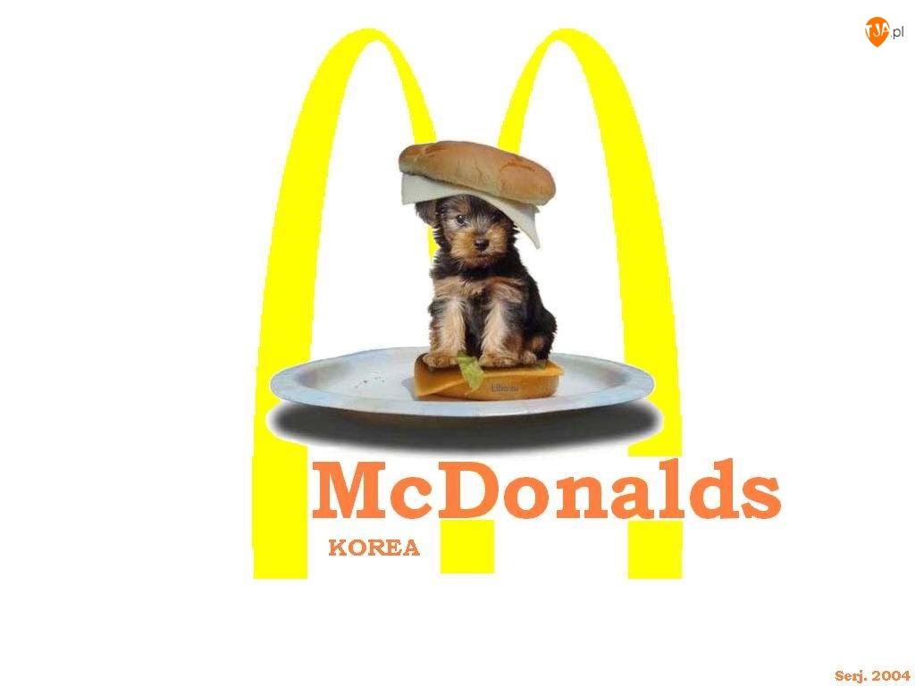 Kanapka, McDonalds, Piesek