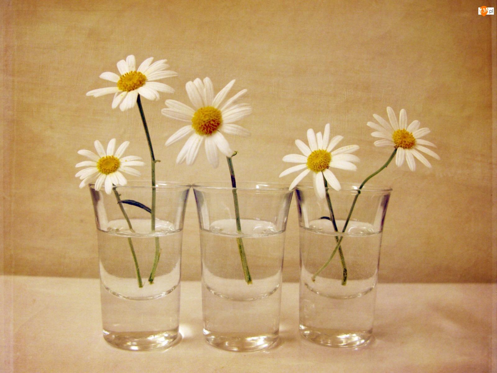 Szklanki, Margarytki, Woda, Białe