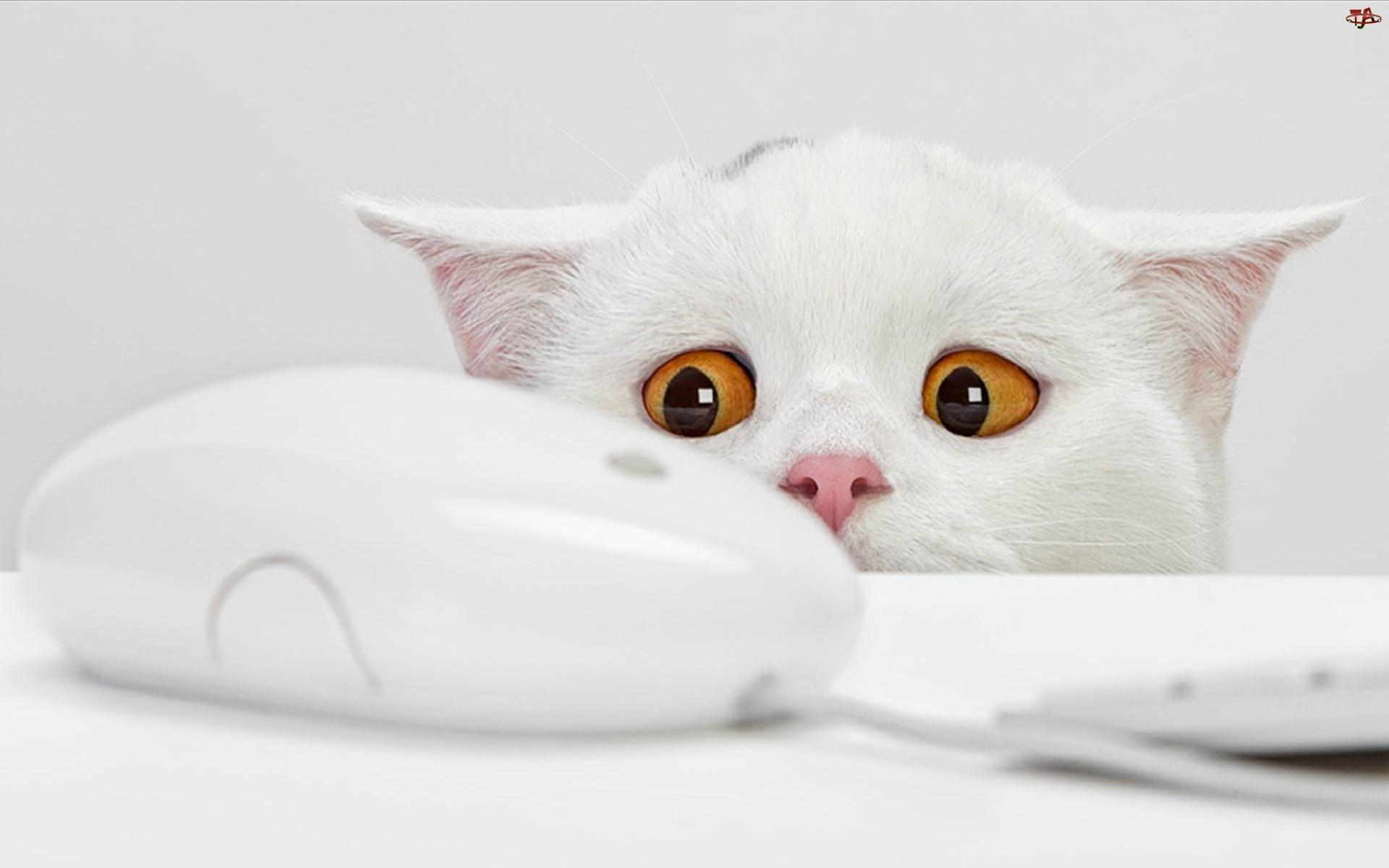 Komputerowa, Kot, Myszka