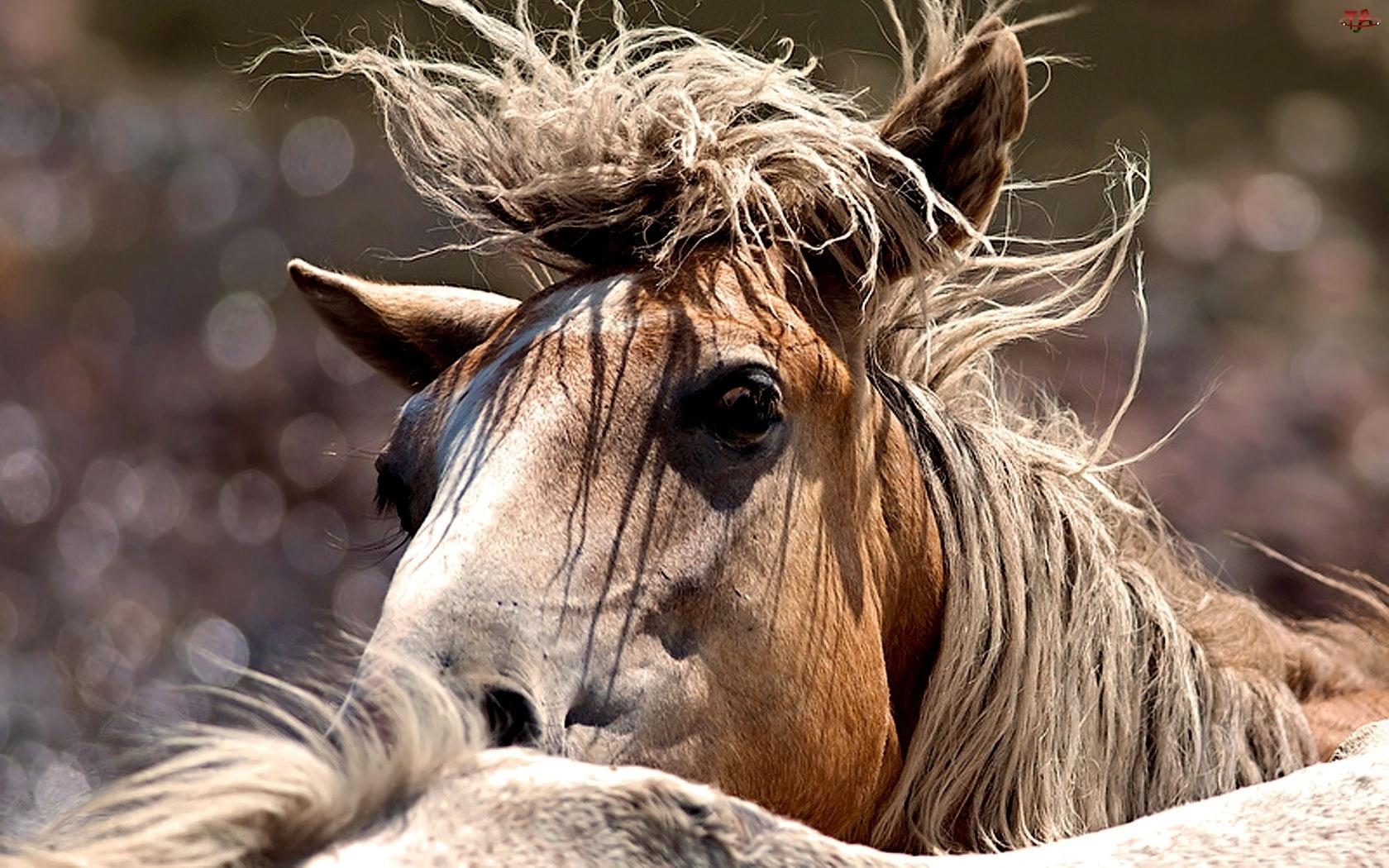 Oczy, Koń, Grzywa