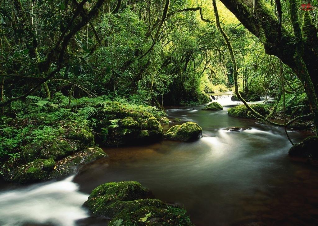 Drzewa, Rzeka, Las