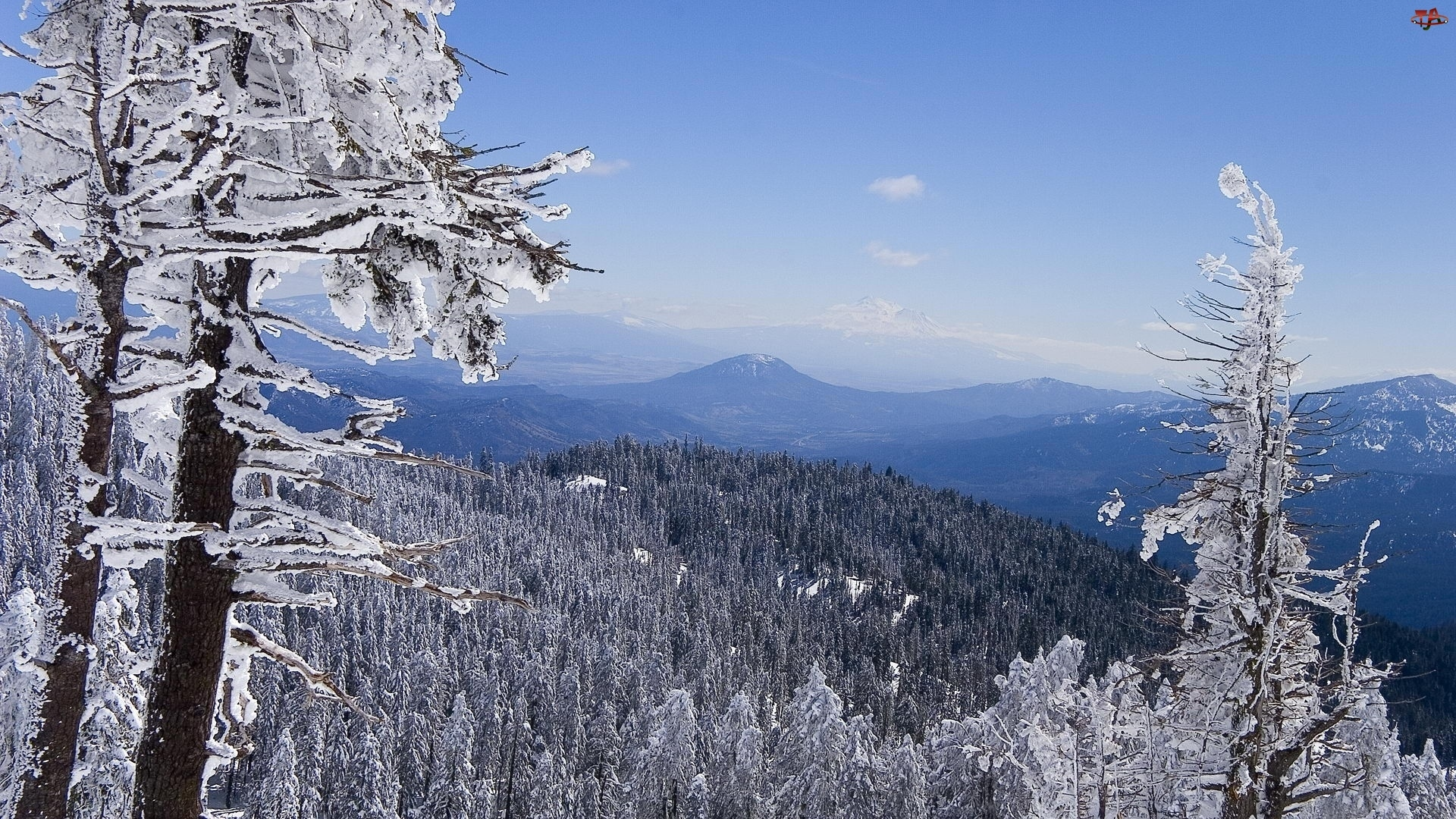 Drzewa, Szczyt, Zima, Góry, Stok
