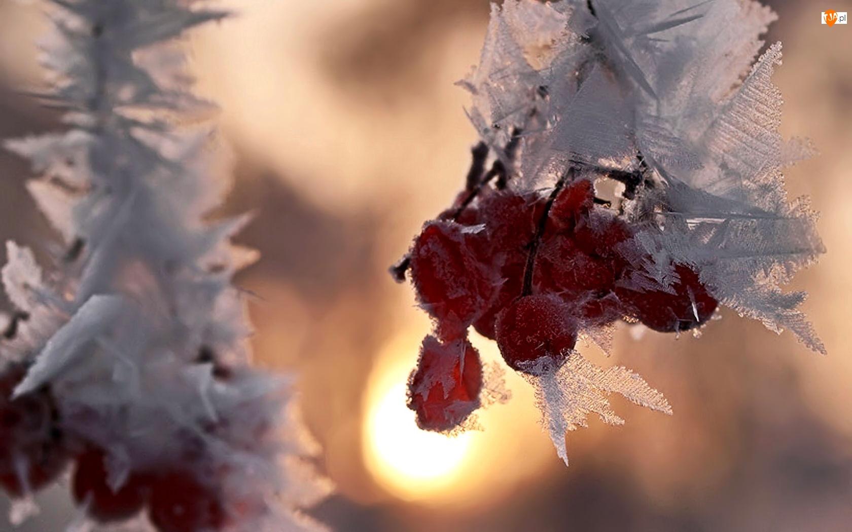 Zima, Owoce, Śnieg, Lód