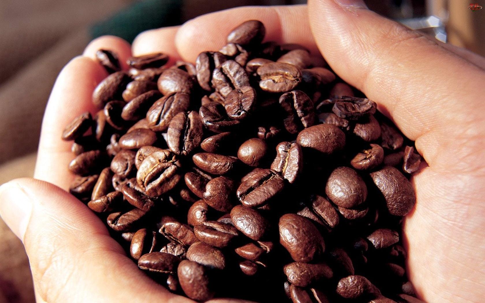 Dłonie, Ziarna, Kawy