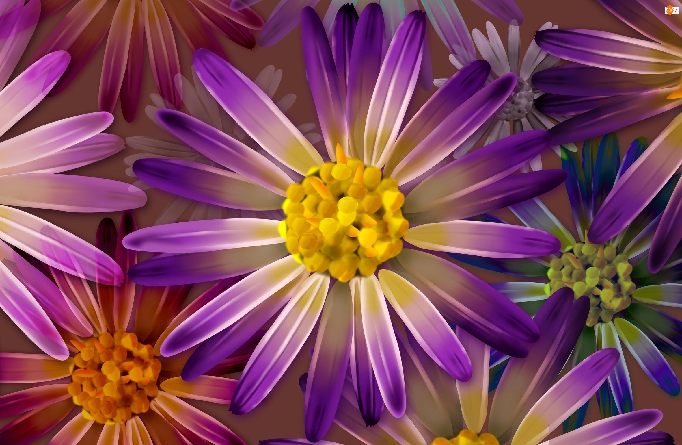 Fioletowe, Kwiatki