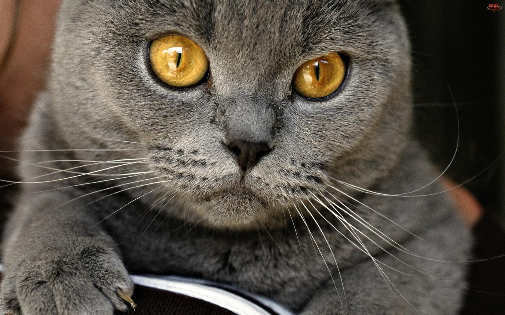 Kot, Oczy, Pyszczek, Piękne
