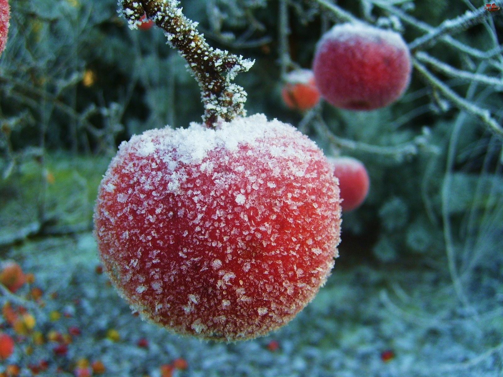 Zima, Jabłka, Szron