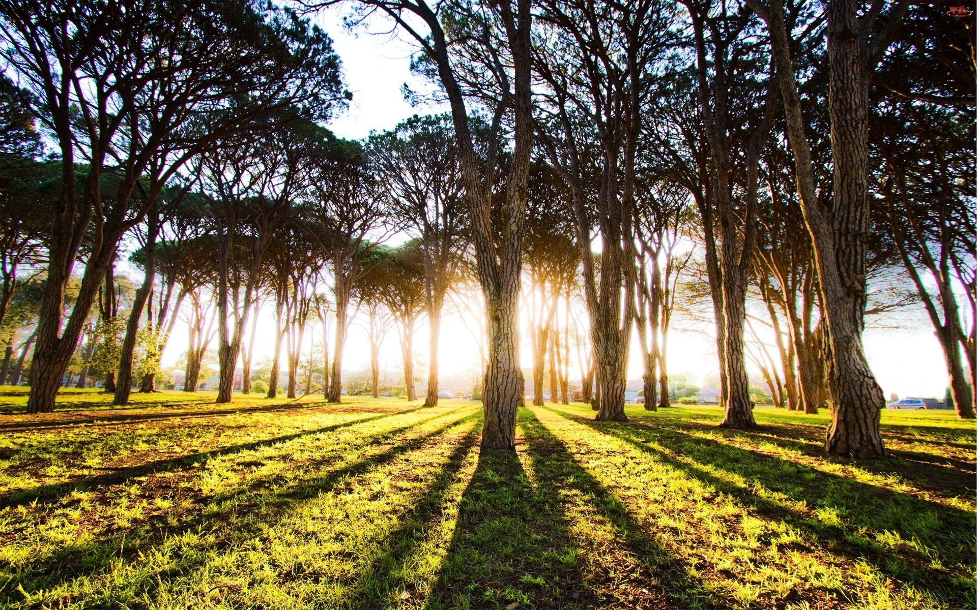 Cienie, Las, Drzewa