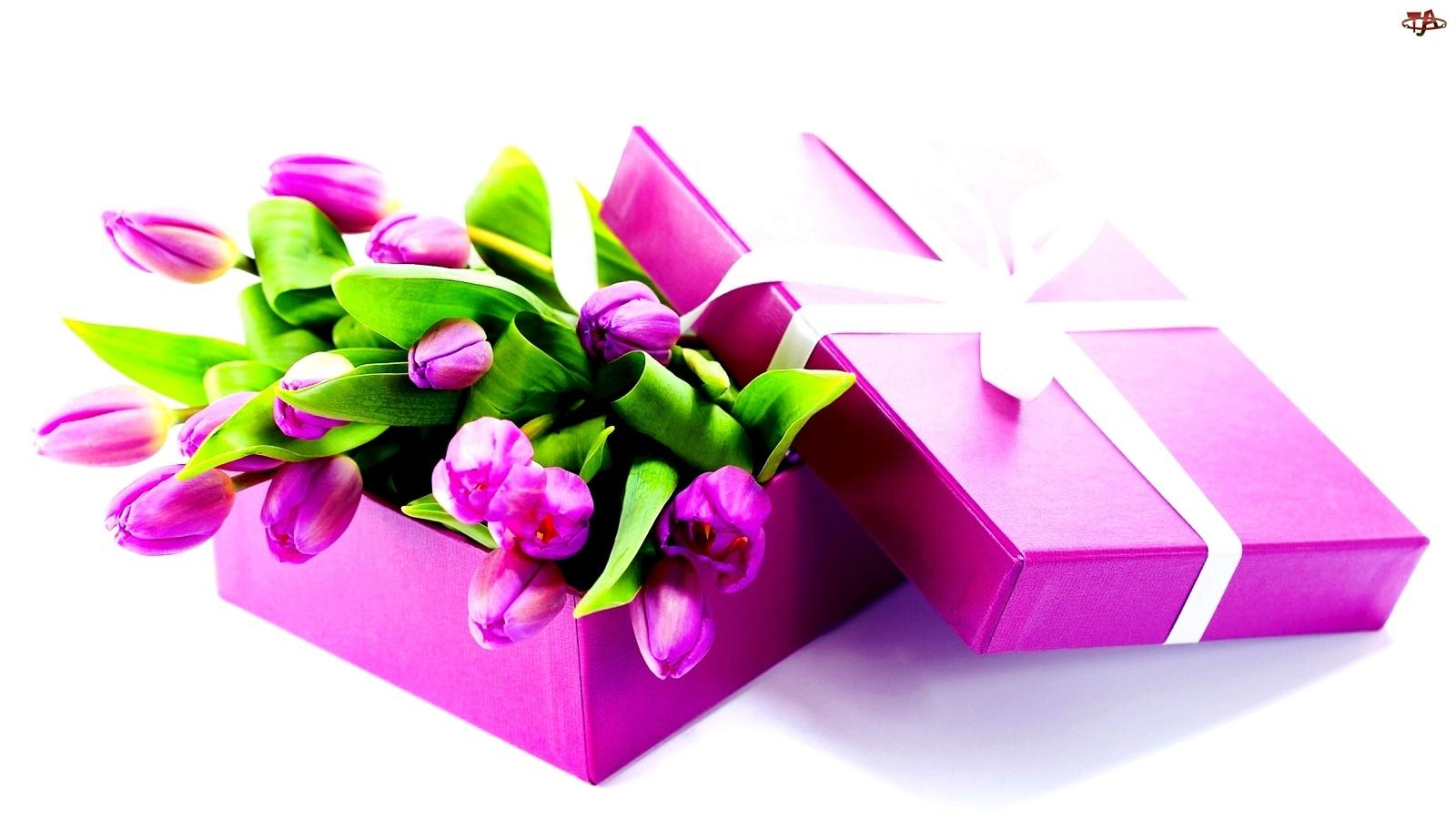 Tulipany, Fioletowe, Pudełko