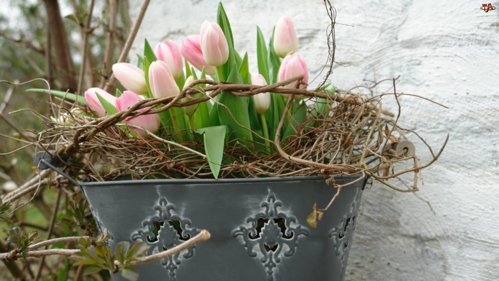 Wiadro, Tulipany