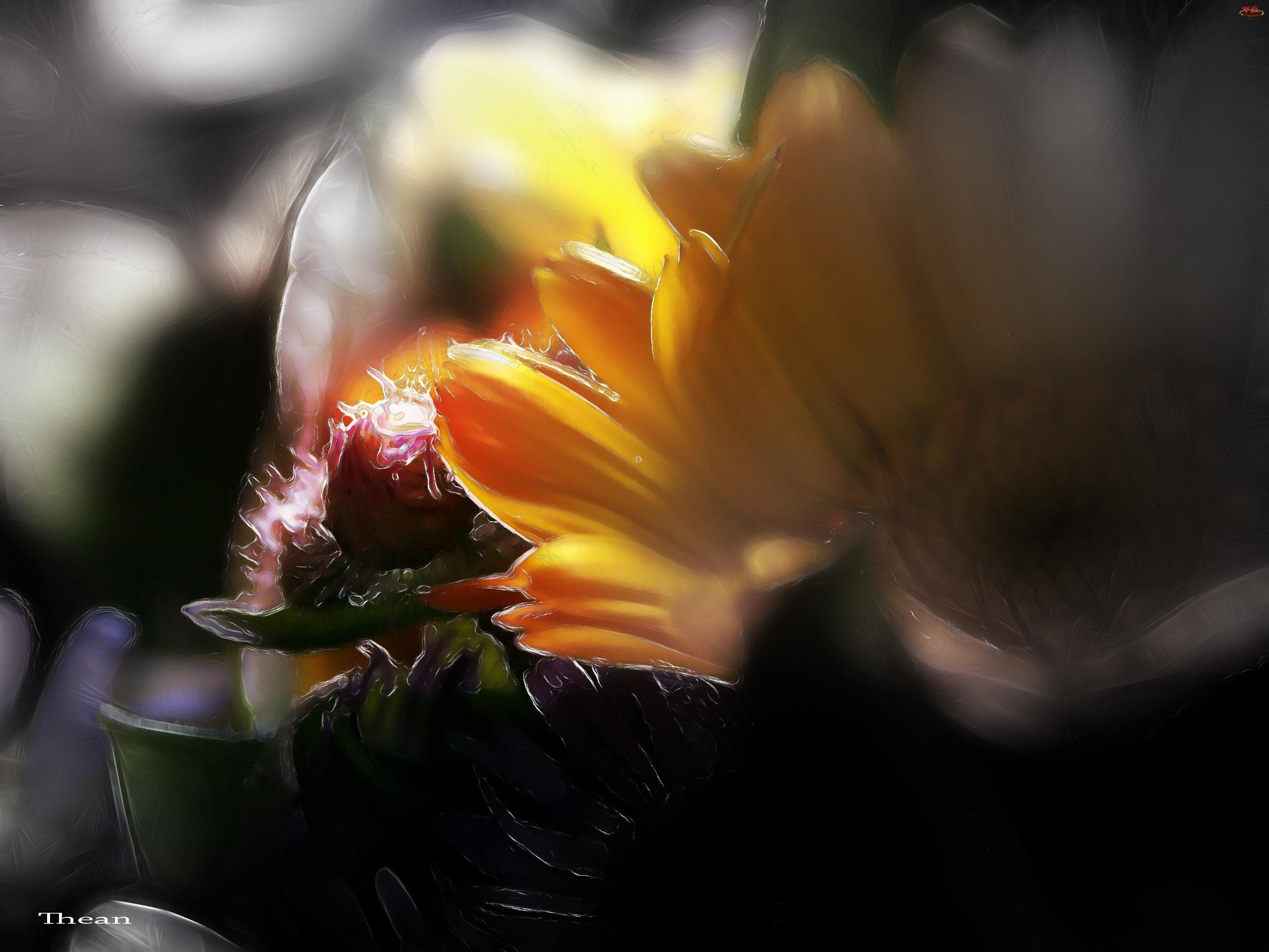 Fractalius, Kwiaty, Polne