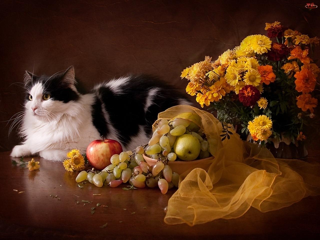 Tkanina, Kot, Kwiatów, Bukiet, Owoce