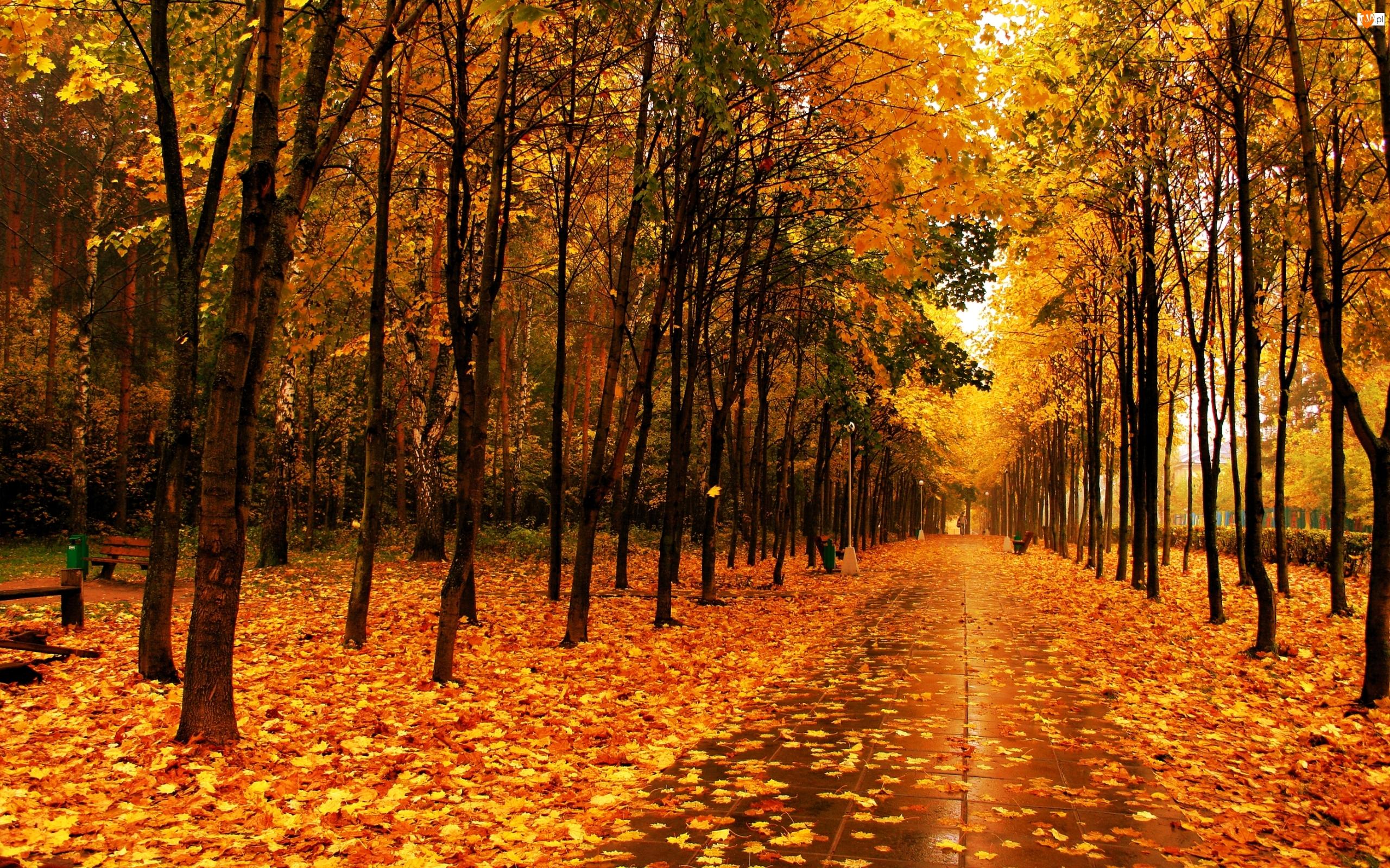 Park, Liście, Jesienią, Złote