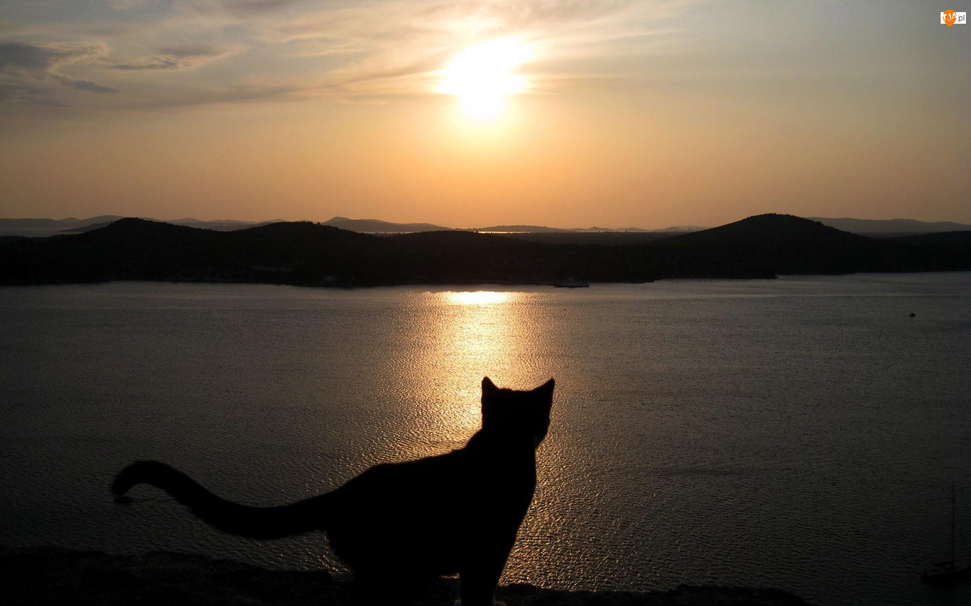 Góry, Kot, Jezioro, Zachód słońca