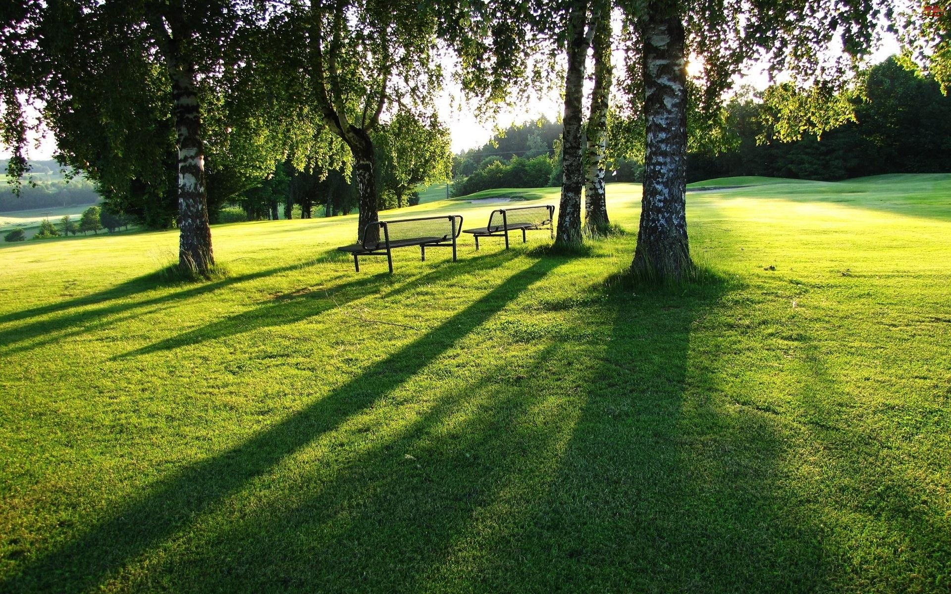 Park, Drzewa, Trawa, Brzozy, Ławeczki