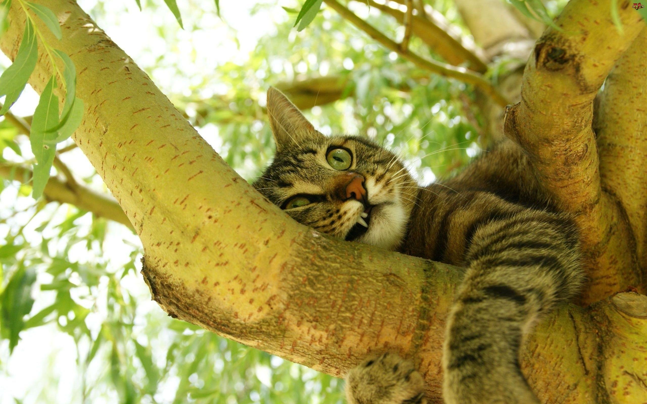Liście, Kot, Drzewo