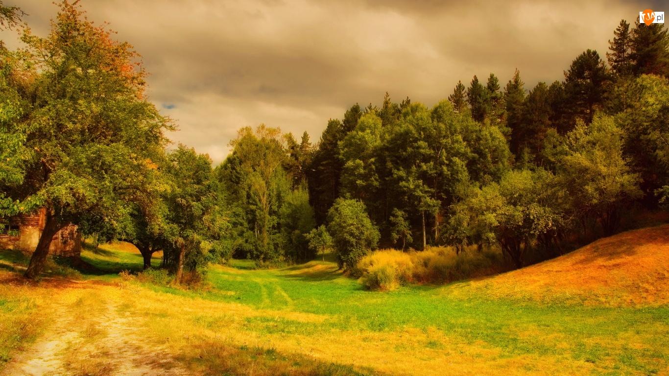 Trawa, Las, Drzewa