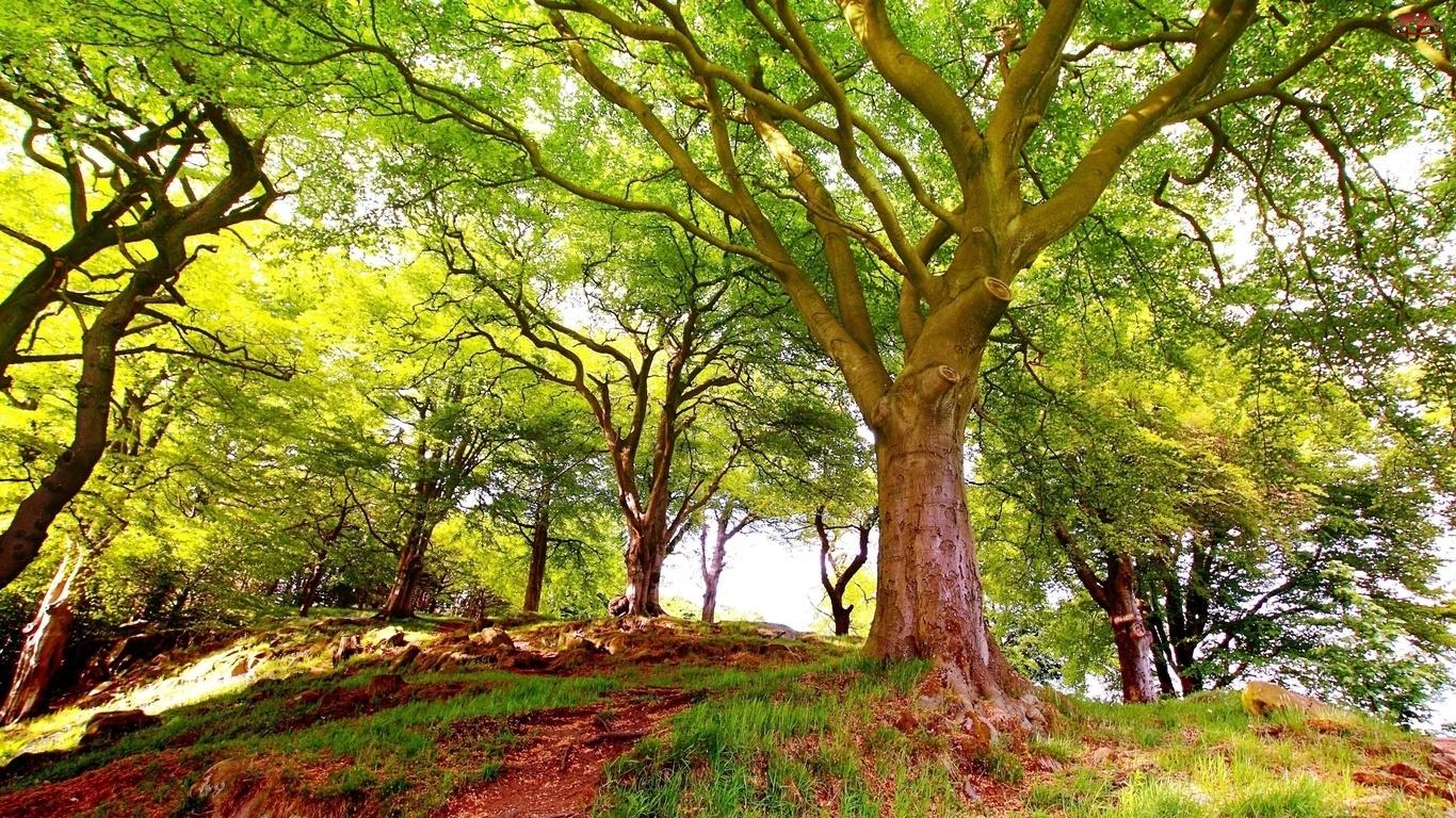 Drzewa, Pagórek